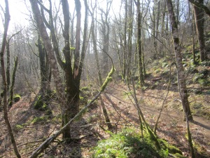 Cape Horn Forest