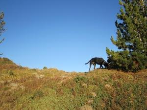Mount Hood Hiking