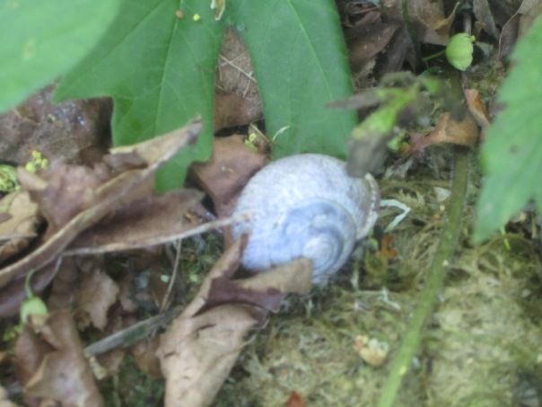 Snail city: one of seven or eight in fifty yards