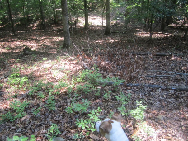 Jackie searching the source of bird noise or squirrel chirp