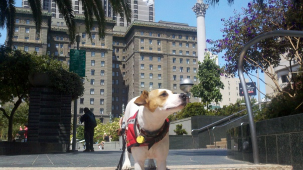 Jackie Chan the Wonderdog posing in Union Square