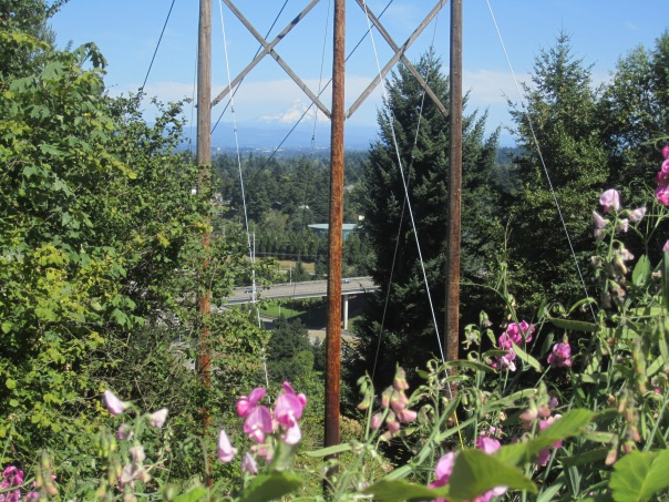 Combination of view: powerlines, freeway, sweetpea, Mount Hood