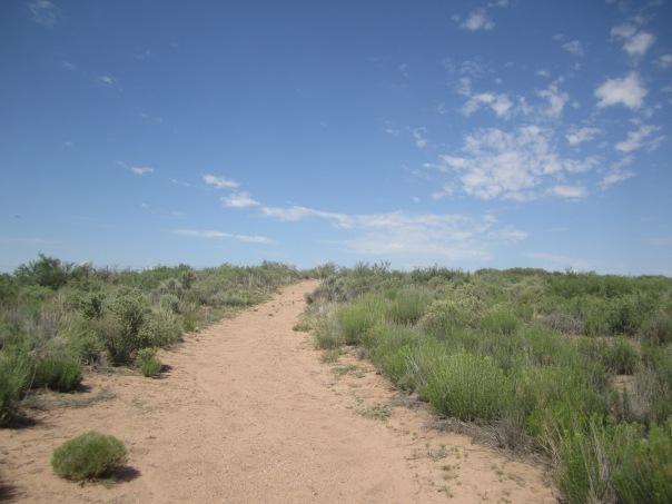 Upland Desert Trail near Bitter Ponds Wildlife Refuge