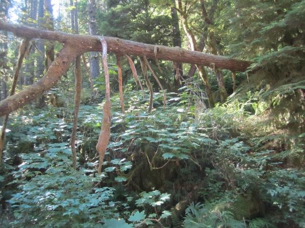 Columbia Gorge waterfall hike