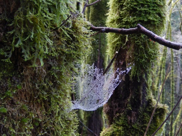 A magical, watery web