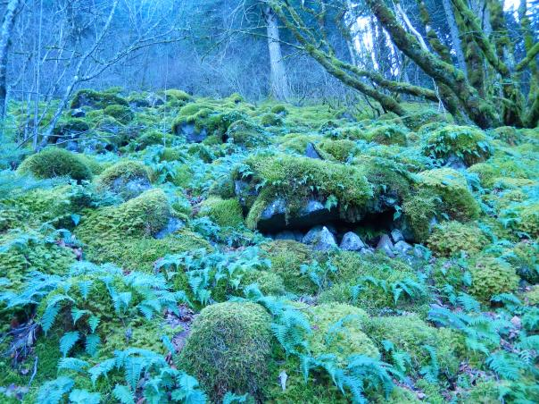 I quite liked this mossy oulder field