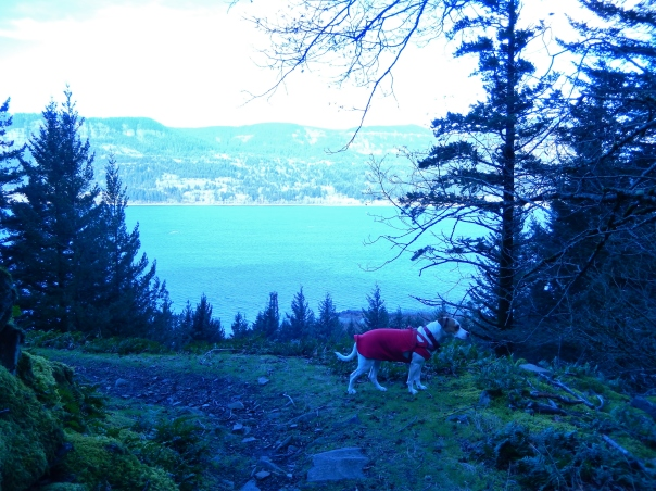 View of the Columbia River from the Gorge Trail.