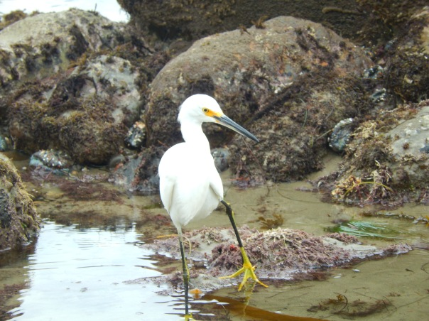 Is it a snowy egret or something else?