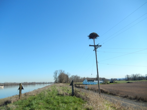 Nest atop the pole