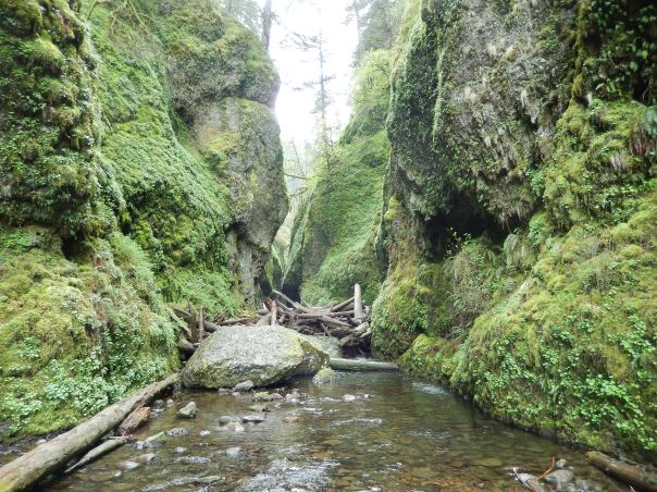 The beginning of gorgeous Oneonta Gorge