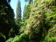 Nearly vertical canyon walls of moss and ferns