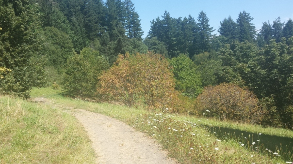 Walking up a sunny slope on the Maple Trail