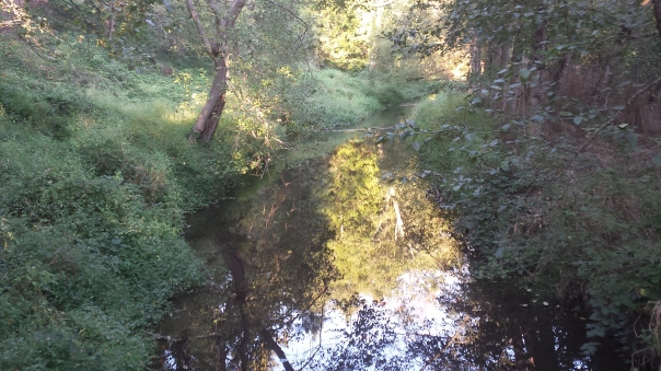 Another pretty Oregon creek, and so close to home, too!