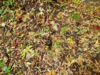 A taste of color underfoot