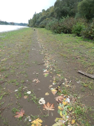Leafy waterline detritus
