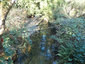 Pretty little creek