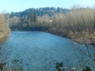 Looking up the Clackamas River