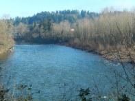 Looking up the Clackamas River