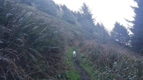 Climbing the Neahkahnie Mountain meadow