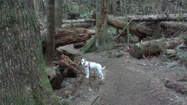 The woods got dark and dense