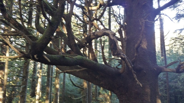 Loved this Dr.Seuss tree.  A huge limb fell but remains suspended by other limbs below