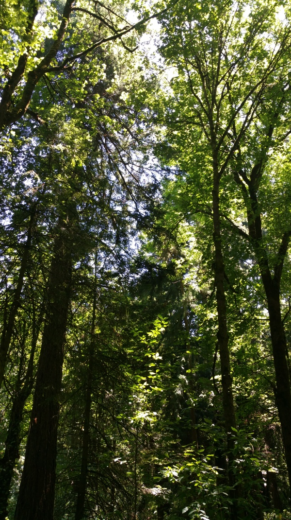 The lush forest canopy kept the temperature down on the trail