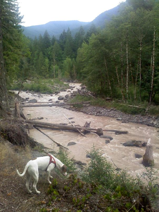 Looking at the swollen Sandy River