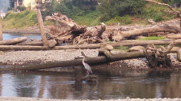 That's Mr. Heron to you...