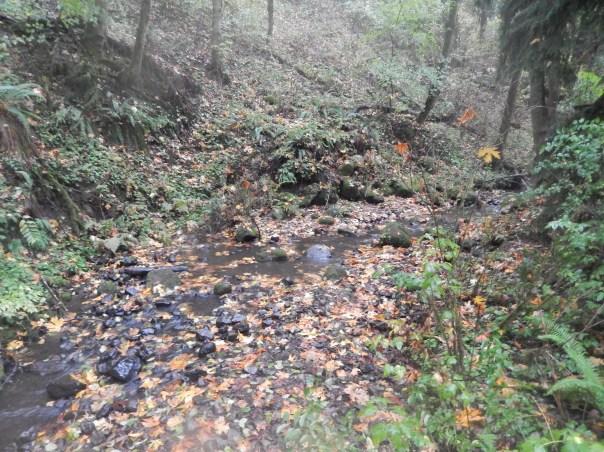 Leaf speckled Balch Creek