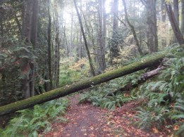 When this tree fell, someone heard it