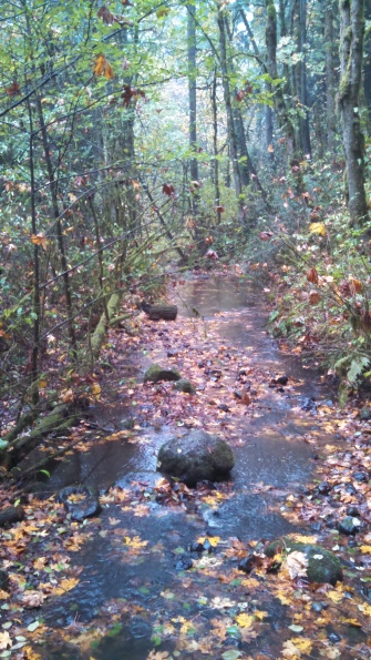 Looking down Balch Creek