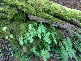Ferns and moss take over the world