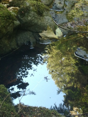 Tiny reflecting pool, critters and all