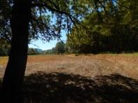 The open land felt almost desert like