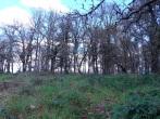 A hill, trees, sky