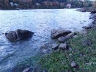 Rocks, water, shoreweeds