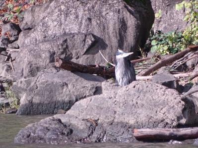 Hello, heron
