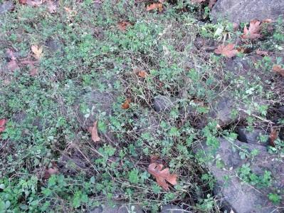 A net of weeds growing on rock